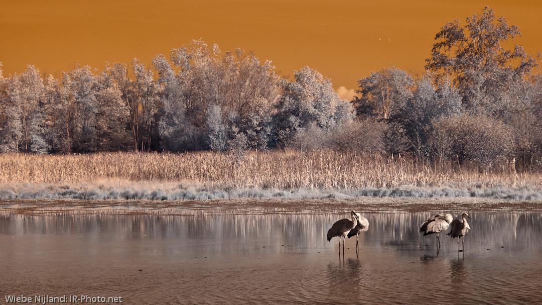 Ir Photo Net Infrared Photography